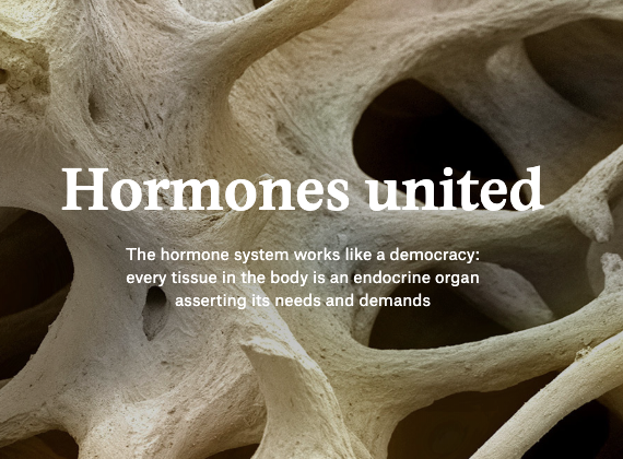 Hormones United – Featured Article by Liam Drew